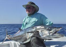 Narrow Barred Mackerel