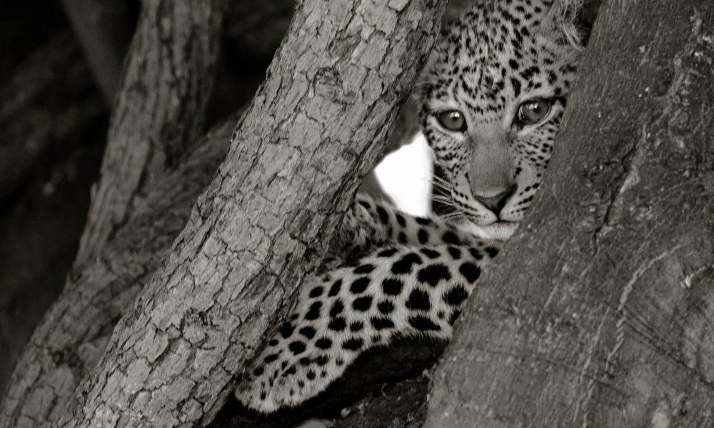 BRC_Wildlife_6