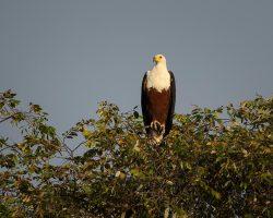 Zambia-Zimbabwe Web -239